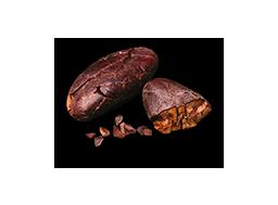 cacao monorigine
